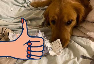 Девушка собиралась на отдых, но пёс сожрал её паспорт. Похоже, любимец знал заранее: хозяйке туда ехать нельзя