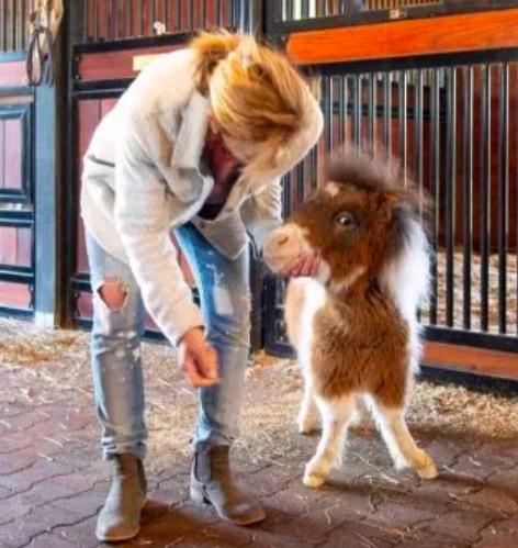 Лошадь из США легко принять за собаку, но дело не в повадках. Всё из-за роста, который делает её особенной