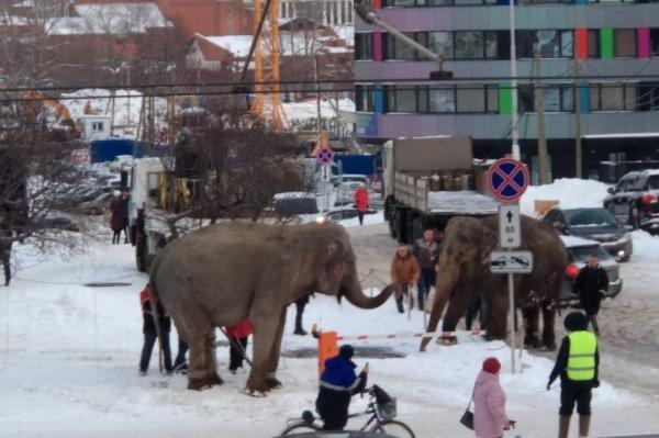 Российская зима наконец решила отсыпать немного снега. На радостях прыгнуть в него захотел даже слон