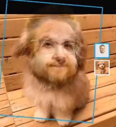 Пёс с лицом человека - двойник Сета Рогена, уверены фаны. Капля фотошопа, и хвостатому пора в дублёры