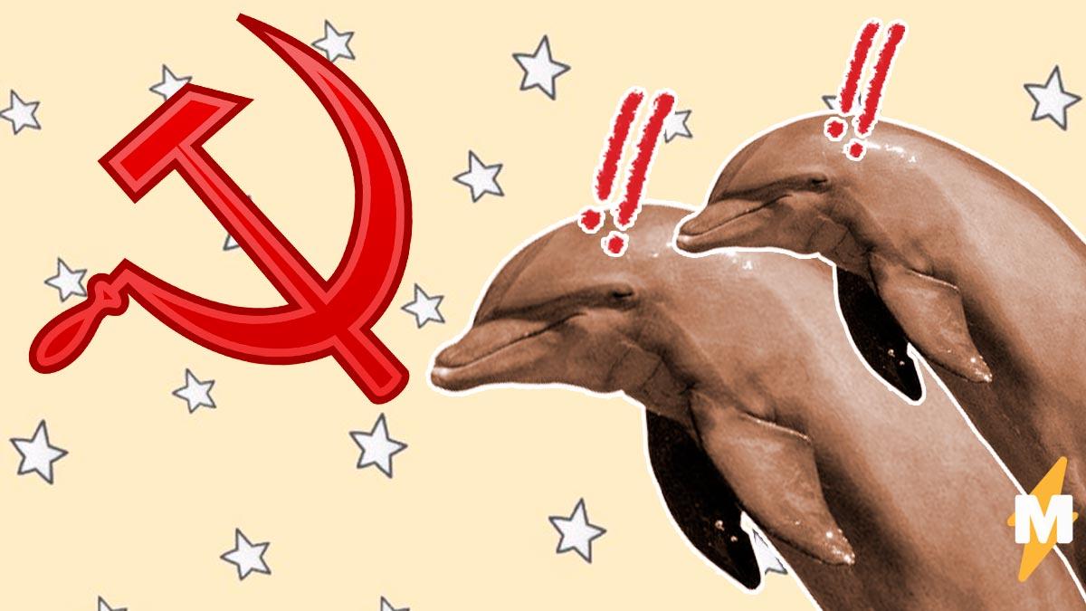 """""""Флот коммунистических дельфинов-убийц"""" - это реальная новость про Иран. И снова виновата Россия"""