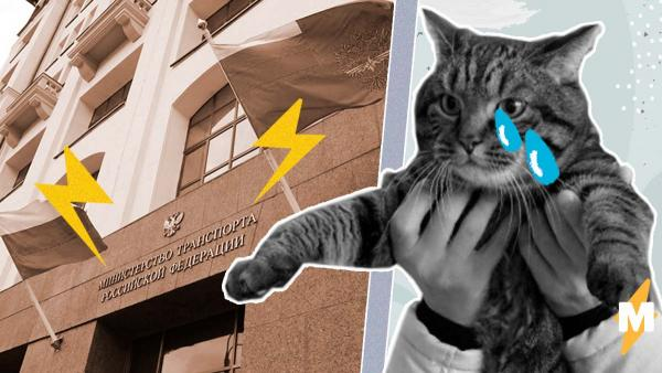 Мемный кот Виктор сел на диету. Ему надо лететь в Казань, а Минтранс не хочет менять нормы перевозки животных