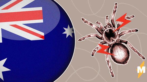 Погода в Австралии снова преподнесла местным жителям сюрприз. Они готовятся к нашествию ядовитых пауков