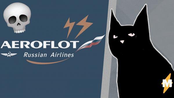 """Проблемы """"Аэрофлота"""" с перевозкой животных привели к трагедии. Два кота погибли после перелёта в багаже"""