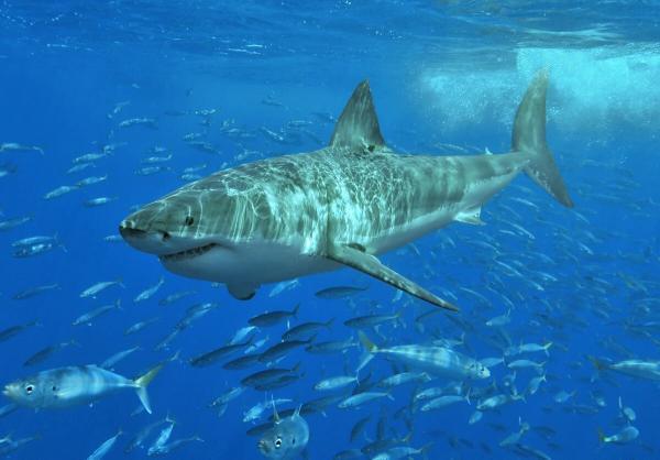 Учёные нашли гигантскую голову акулы, которой 330 миллионов лет. И этот зубастый артефакт дважды уникален