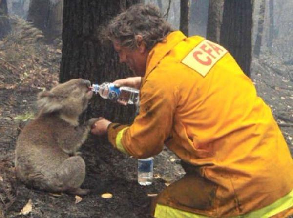 Как помочь Австралии справиться с лесными пожарами? Все доступные способы внести свой вклад в спасение природы