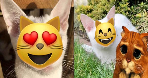 Девушка купила котика, и обомлела, когда он открыл глазки. Ведь редкая болезнь сделала его живым чудом
