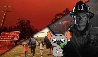 Как помочь Австралии справиться с пожарами. Есть простые способы внести свой вклад в спасение природы (и коал)