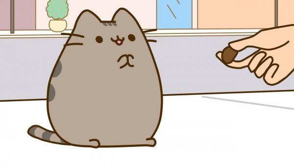 """""""Один из лучших котят, что я видел"""". В США нашёлся самый пушистый кот, и он даже слишком похож на облачко"""