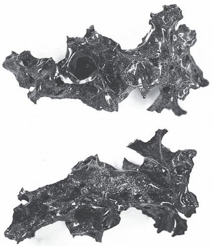 На месте извержения Везувия в Помпеях нашли чёрное стекло. И это оказался человеческий мозг
