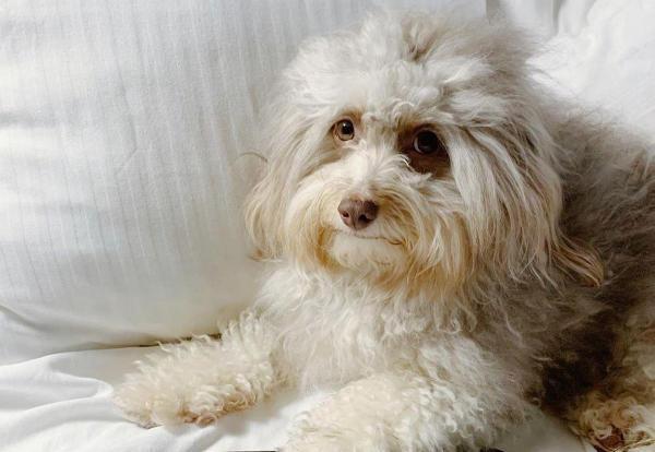 Популярному псу с лицом человека нашли звёздного двойника. Это Сет Роген, и для сомневающихся уже есть пруфы