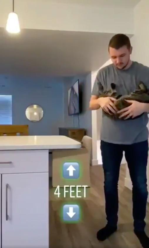 Кошка (не) всегда приземляется на лапы. Люди увидели эксперимент, о котором их котики очень сильно пожалели
