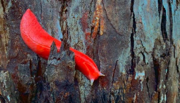 Уникальный розовый слизняк пережил погодный апокалипсис в Австралии. Ведь он настоящий герой и просто красавец
