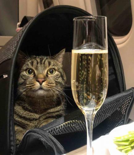 Мемный кот Виктор сел на диету. Ему надо лететь в Казань, а Минтранс отказался менять нормы перевозки животных