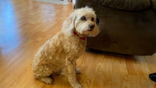 Псу становилось плохо в доме, но не из-за болезни. Он спасал хозяев от опасности, которую те не могли заметить