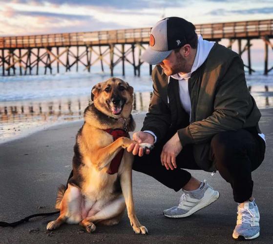 Парень честно описал жизнь с собакой, и ему аплодируют тысячи людей. Ведь он раскрыл тёмную сторону питомцев