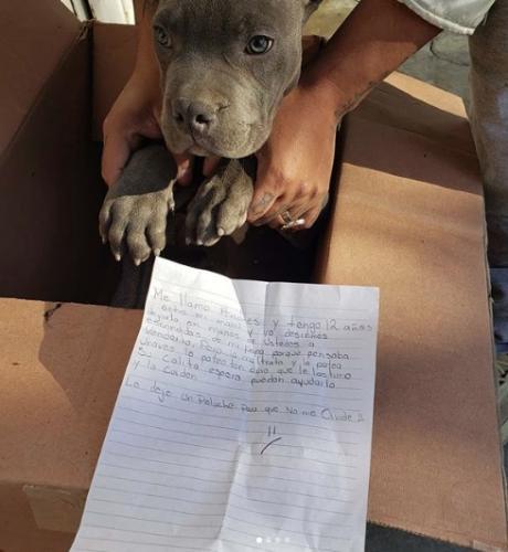 В приют подкинули маленькую коробку, а в ней пёся. Но жаль не только щеночка, но и малыша, который его бросил