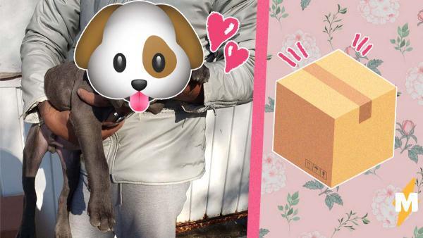 В приют подкинули маленькую коробку, а в ней пёс. Но жаль не только щеночка, но и малыша, который его бросил