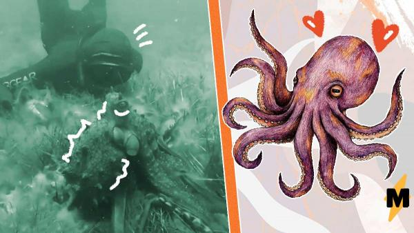 Дайвер погрузился под воду, а там - огромный осьминог. Но маленький монстрик хотел всего лишь обниматься