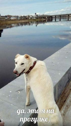 Долгая дорогая домой. Девушка проехала 2 тысячи километров, чтобы забрать пса из приюта