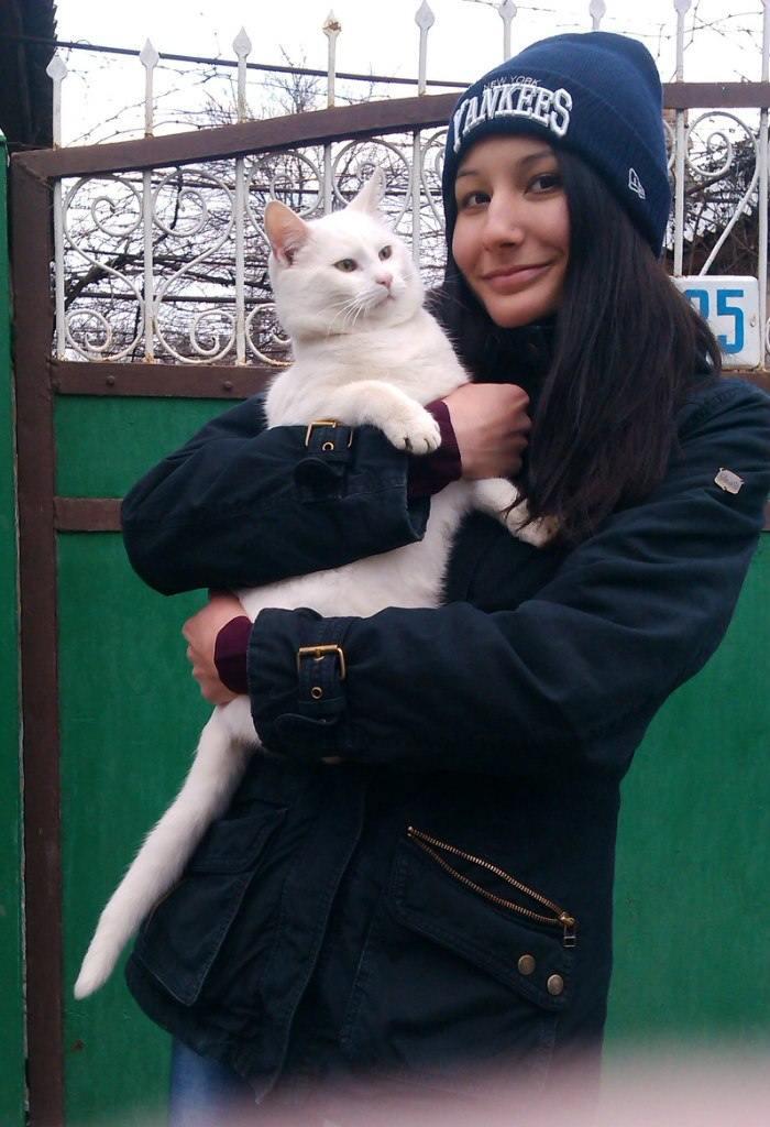 Помните мем с доберманами и белым котом? Хвостатый отыскался - он цел, а убежать от псов ему было нетрудно