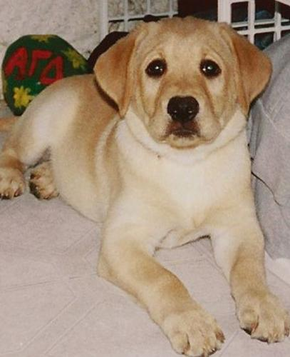 Пёс спас беременную хозяйку и заслужил вечную жизнь. Буквально, ведь хозяева создали его копию