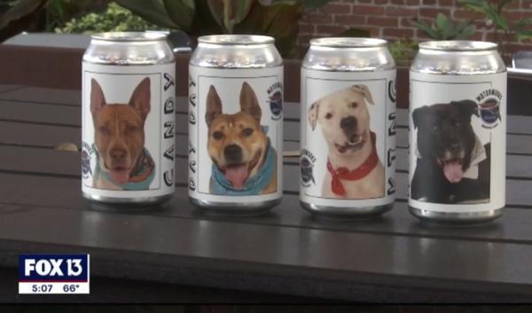 Женщина увидела пса на банке пива на фото и удивилась. Это была встреча, которой она ждала три года