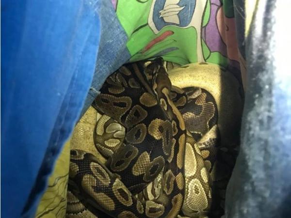 Змеи у пожарных