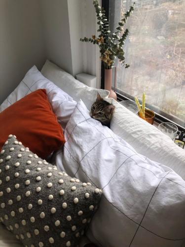 Девушка застелила постель и сделала генеральную уборку. Вот только о коте она забыла - и он превратился в мем