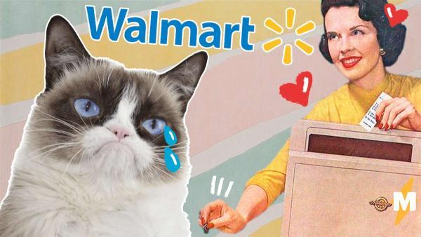 Наследница кота-мема умеет в рекламу