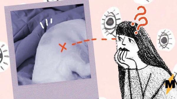 Единственный в мире малыш козлосвинопёс. Иллюзия со странным зверем ломает людям головы, и от ответа не легче