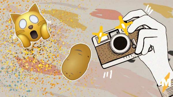 Девушка распылила глиттер над камерой и получила релакс-флешмоб. Но потом в ход пошли картошка, коты и дети