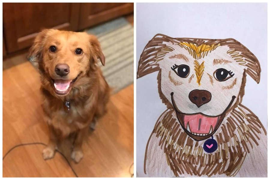 Рисунки приюта для животных