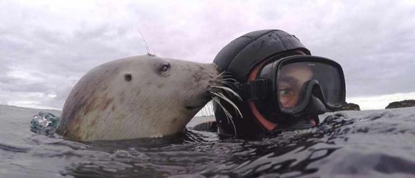 Тайна тюленей раскрыта. Учёные засняли, как подводная банда издаёт звуки выстрелов - и это очаровательно