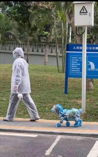 В Китае объявился пушистый борец с коронавирусом. Символом сопротивления он не стал, но в мем уже превратился