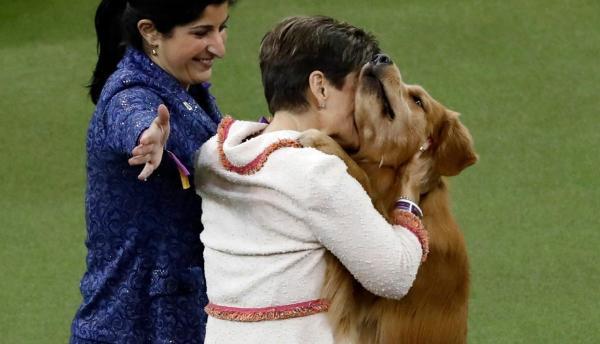 На шоу собак звание лучшего не дали самому хорошему мальчику. Но он взял более важный титул: народную любовь