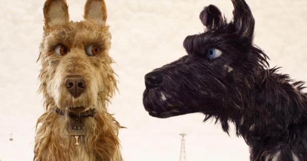 Коронавирусом впервые заразилась собака. Она подхватила болезнь от хозяйки