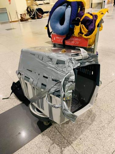 В аэропорту Сочи грузчик уронил клетку с собакой и починил её скотчем. Пёс не пострадал, а человека уволили