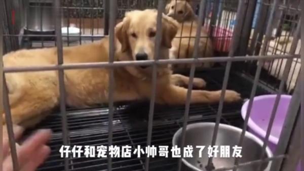 Владелица собаки застряла в Ухани, и её пёсик страдал от голода
