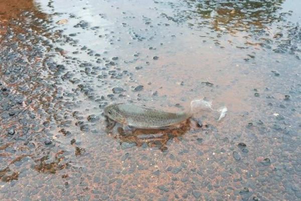 Жители маленького городка повстречали необычных прохожих. По улицам разгуливали рыбы, приплывшие по воздуху