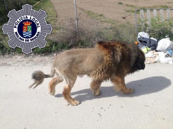 Горожане вызвали полицию, увидев в парке льва. Но копы оставили его на свободе, ведь он был хорошим мальчиком