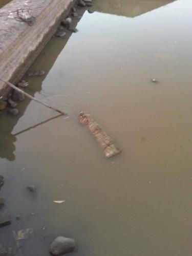 В реке нашли тело, а оно оказалось марионеткой. Но это даже страшнее, ведь насторожился сам Гильермо дель Торо
