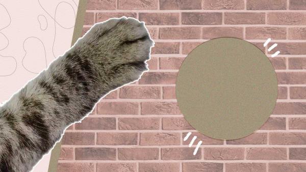 Кот точил когти и расцарапал обои, а хозяйка и рада. Под отделкой её два года ждал красивый сюрприз