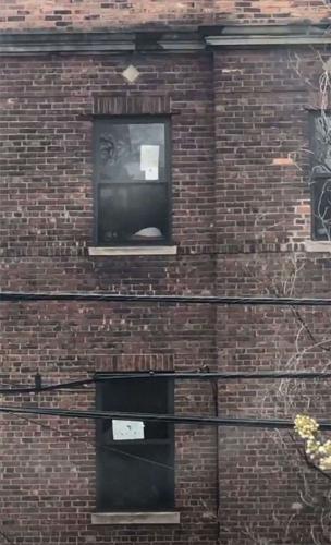 Женщина хотела узнать соседей, а те оказались звёздами. Она много лет жила рядом с Дэвидом Боуи и Vanilla Ice