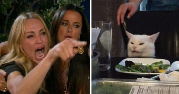 """""""Веганы запретили хищников"""". Девушка въехала в новый дом, и соседи ей не рады - веганка обидела их кота"""