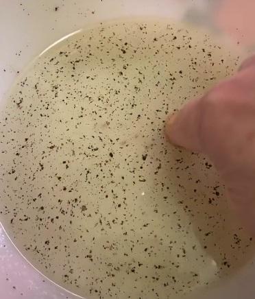 Профессор наглядно показала, что коронавирус не устоит перед мылом. Шах и мат, скептики и грязнули