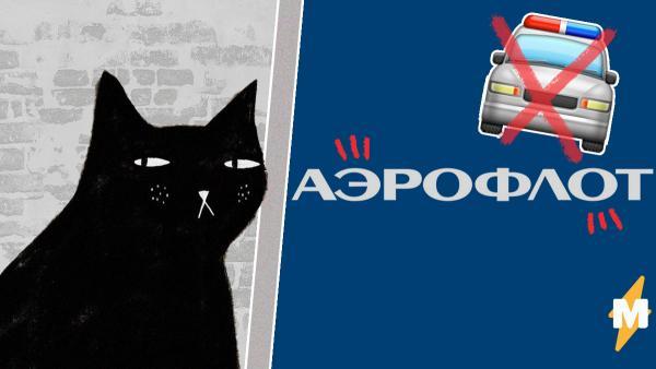 """Полиция отказалась возбуждать дело из-за гибели котов на рейсе """"Аэрофлота"""". По её мнению, виноват ветер"""