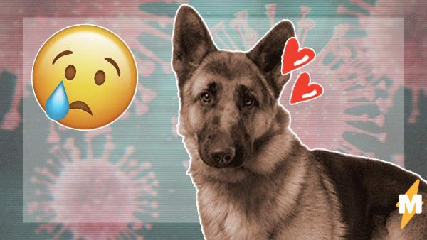 У второй по счёту собаки обнаружен коронавирус. А первый COVID-положительный пёс уже умер