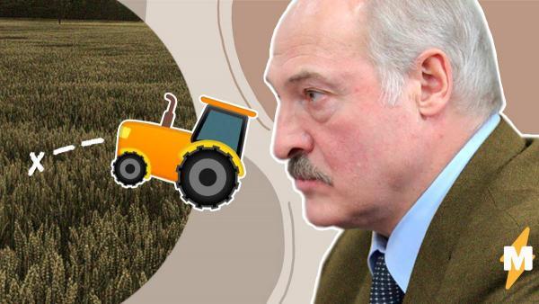 Белоруссия не будет закрывать границу с Россией. Ведь у Лукашенко два средства от коронавируса: трактор и поле