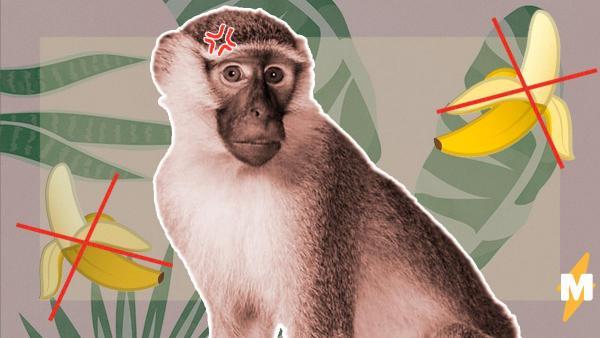 Из-за COVID-19 столкнулись банды, но не человечьи, а обезьяньи. В Сети это сравнили с революцией и социализмом